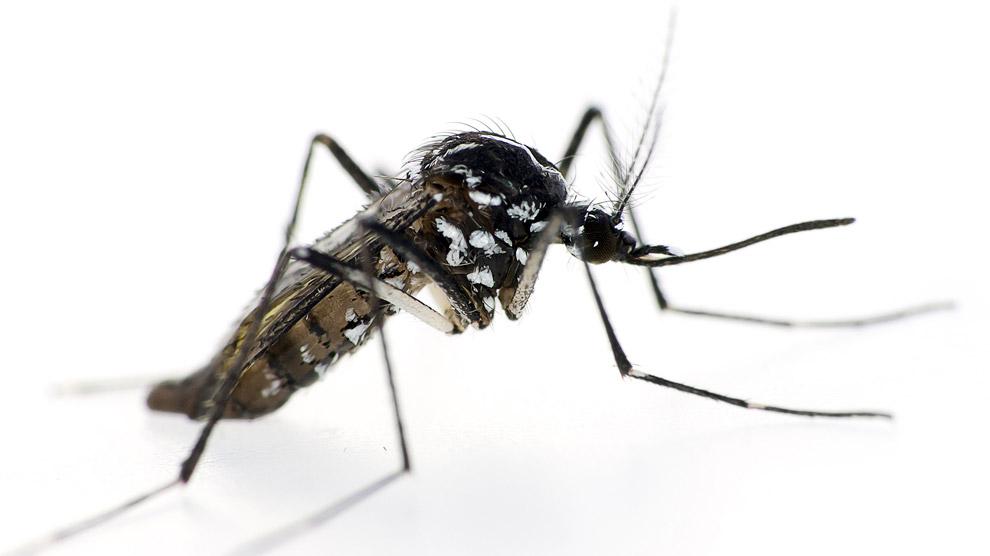 como prevenir la picadura del mosquito tigre
