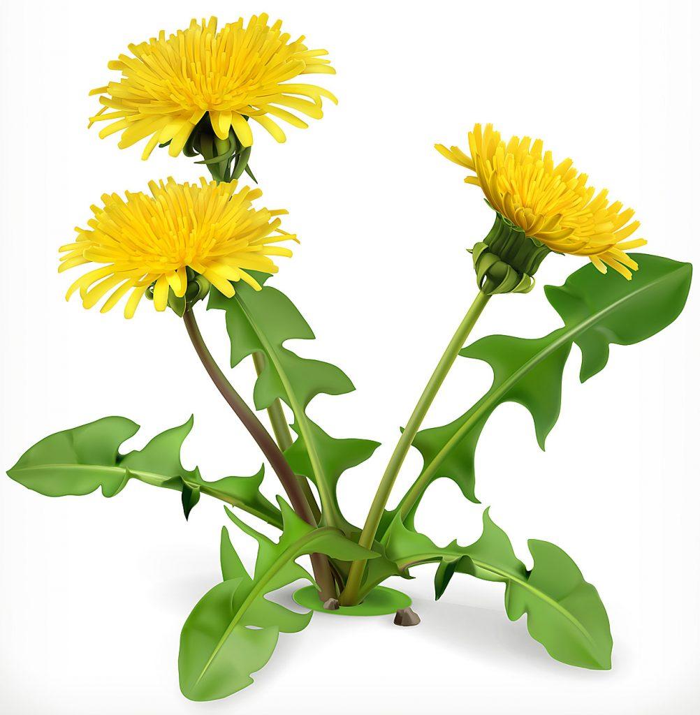 hierbas medicinales para mejorar la prostata